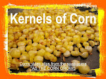 As the Corn Grows - Kernels of Corn