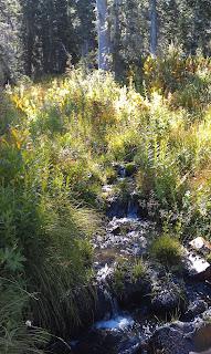 White Pine Trail Alta Utah