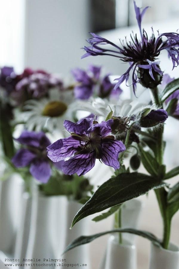 sommarblomma, sommarblommor, blomma, blommor, blommorna, trädgård, trädgården