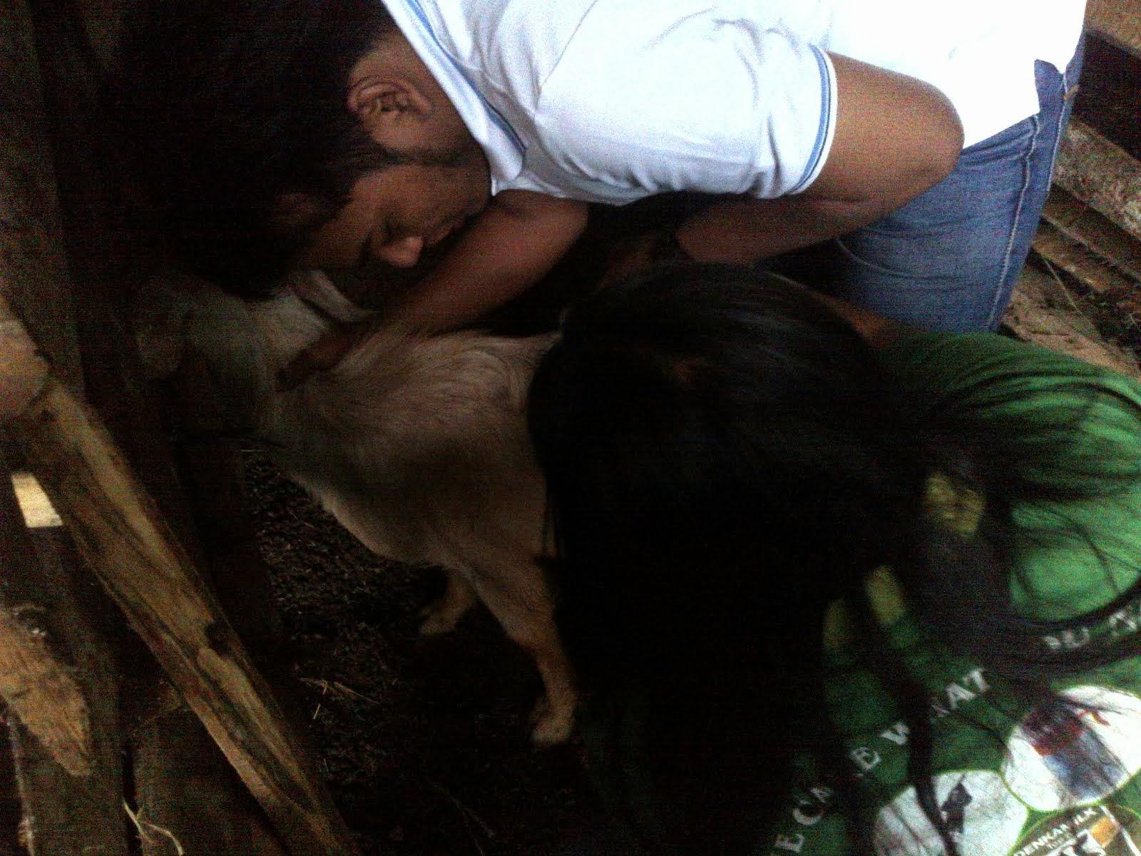 Kunjungan Penanganan Kesehatan Kambing-Domba tgl 28 September 2013