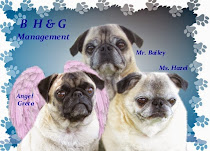 B H & G Management