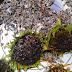 Fengshui dan Cara Meramu Obat Menggunakan Bunga Matahari