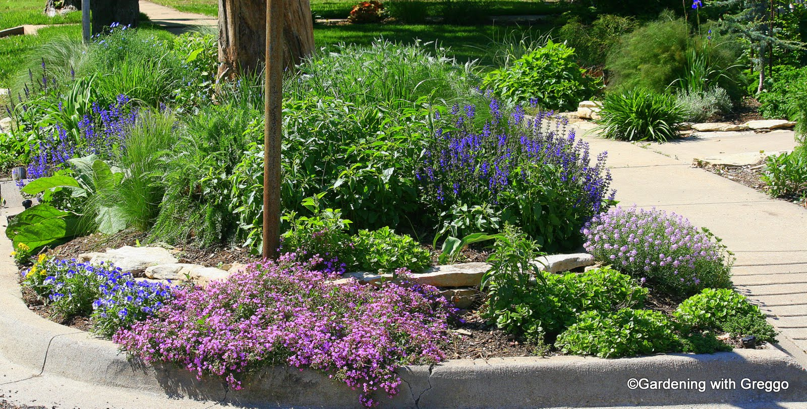April Bloom Day: 101, Tornadou0027s, Flu And Landscaping. Corner Hell Strip  ...