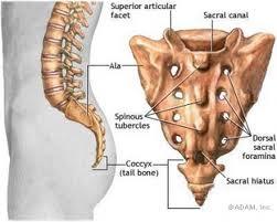 <img alt='Tulang Ekor' src='http://i46.tinypic.com/drb136.jpg'/>