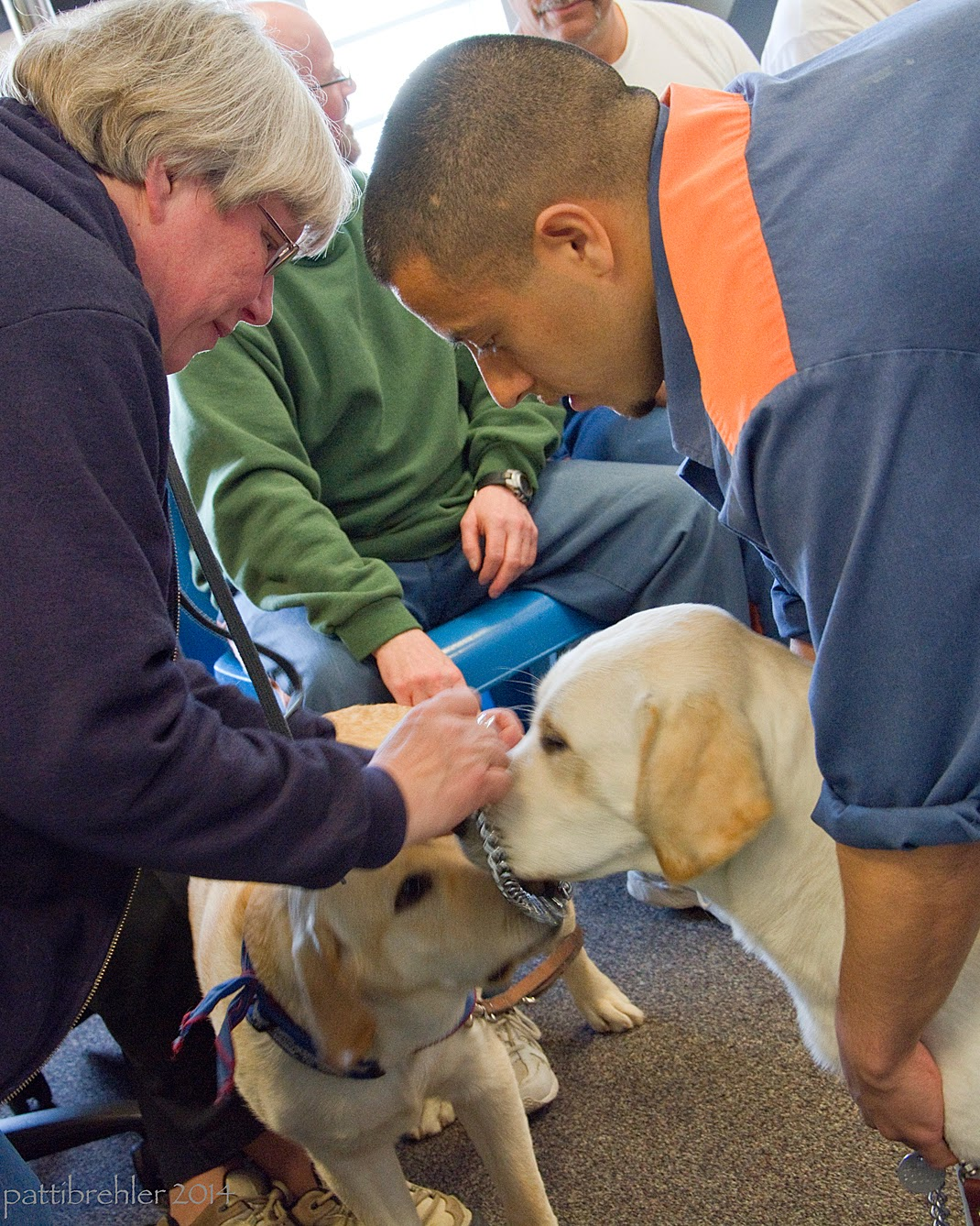 A close shot of a woman (on the left) wearing a purple sweatshirt putting a chain collar over the nost of a yellow lab, which is being held by the man on the right. He is wearing the blue prison uniform. Both the woman and the man are bending toward the middle over the lab. A second yellow lab is sneaking into the middle of things from the left, its leash being held by a man behind wearing a green sweatshirt and blue pants, sitting down on a blue plastic chair. This man's head is out of view.