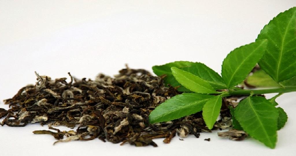 Chá verde funciona para emagrecimento