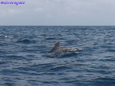 delfini Zanzibar Kizimkazi