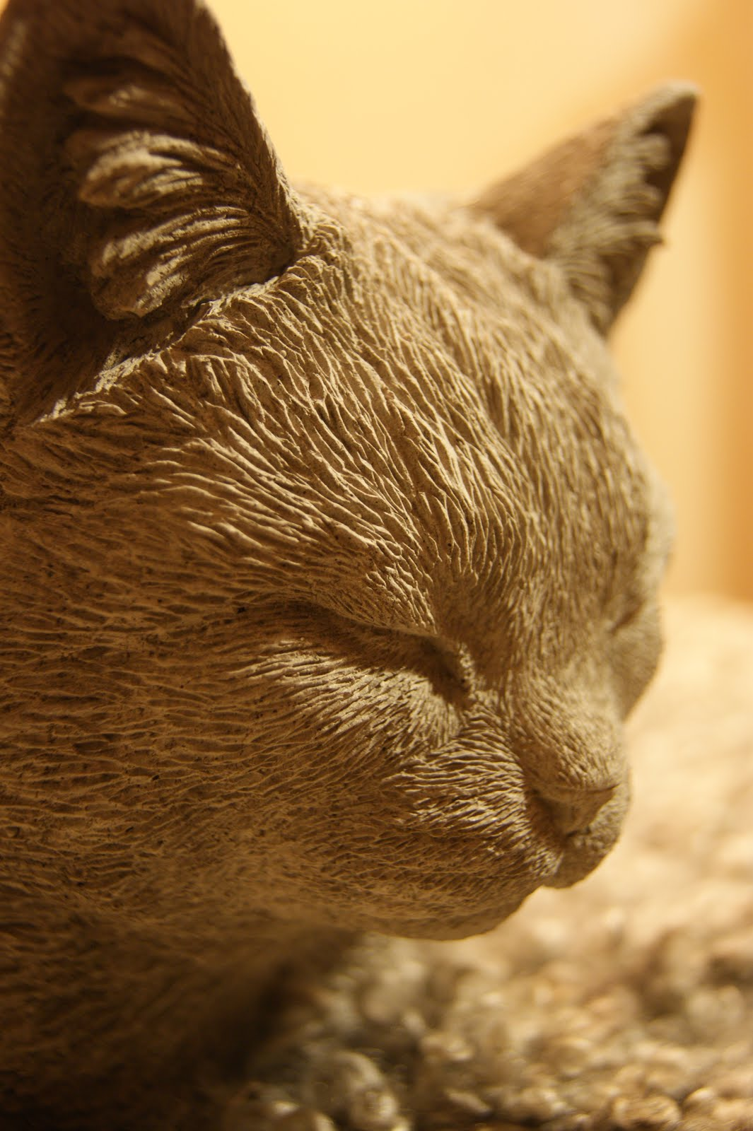 Katten Selma