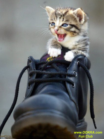 Lovely Kitten Pictures