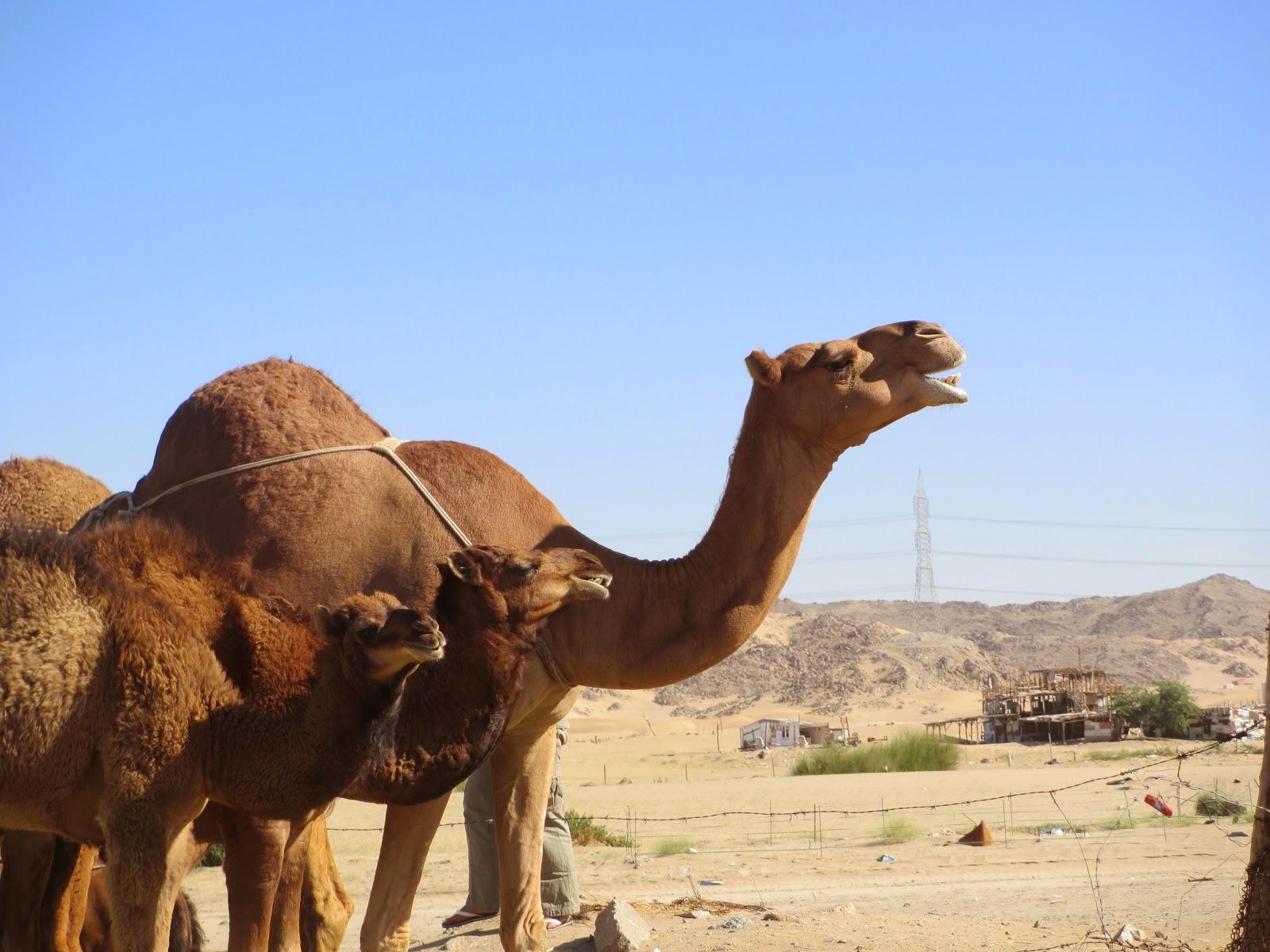 Daftar Travel Haji dan Umroh Resmi Depag