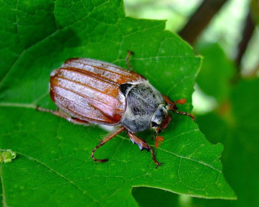 Лучик света - загадки про насекомых