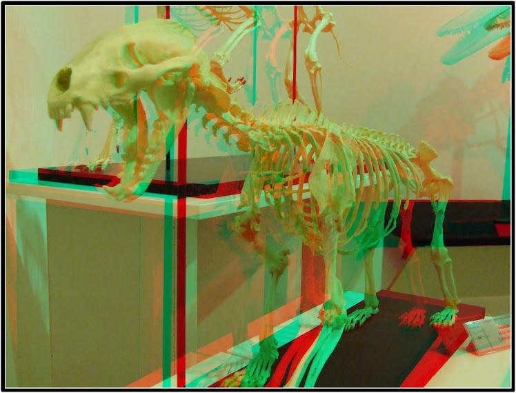 Skelet jazavca