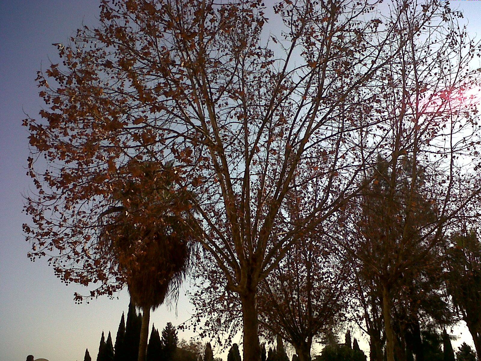 Arboles nestor trabajo de los rboles for El arbol que no tiene hojas