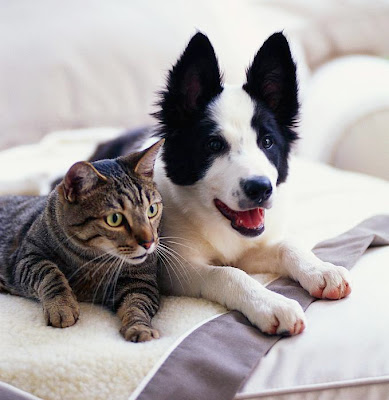 Cats and Dogs images