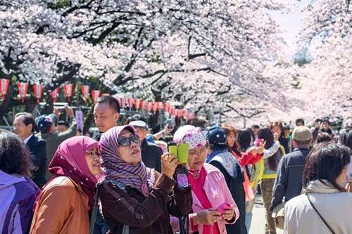 Hình ảnh hoa anh đào đẹp, Vẻ đẹp lễ hội Hoa Anh Đào ở Nhật Bản