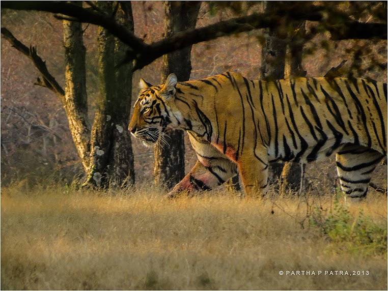 emphoka, photo of the day, Partha Pratim Patra, Canon PowerShot SX40 HS