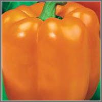 Сладкий перец сорт «Этюд»