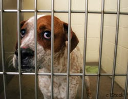Don't Let Your Dog End Up Behind Bars