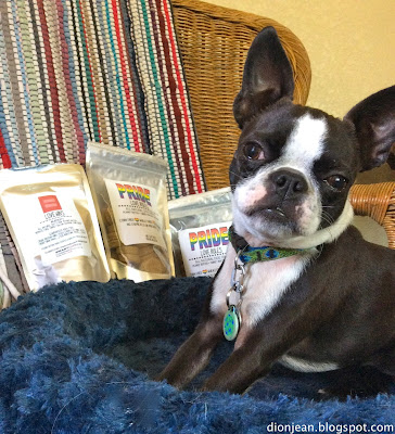 Boston terrier posing with dog cookies