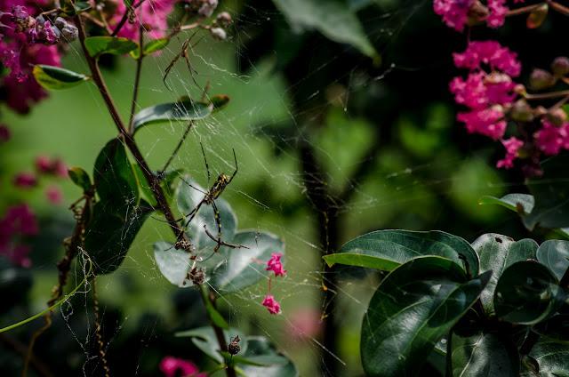 Spiders Yanghak Valley Pohang South Korea