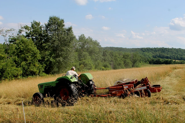 Cutting straw-like hay at the Little Farm