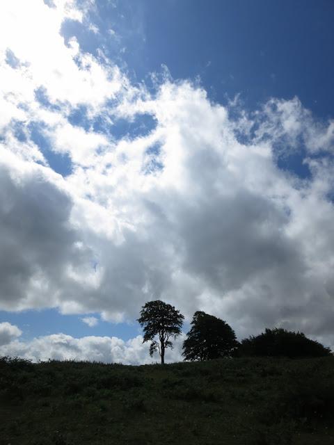 Trees on the skyline - Cothelston Hill, Somerset.