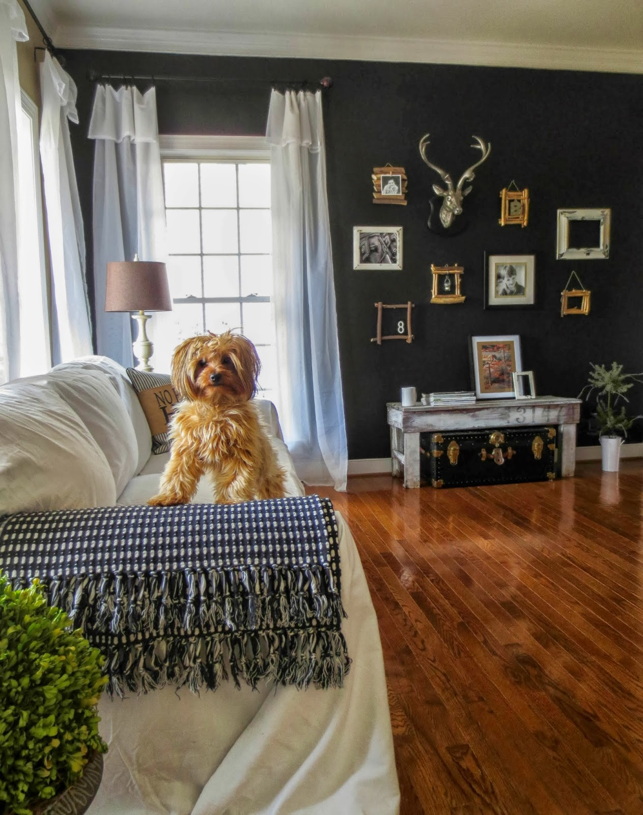 Black Accent Wall down to earth style: paint a black accent wall
