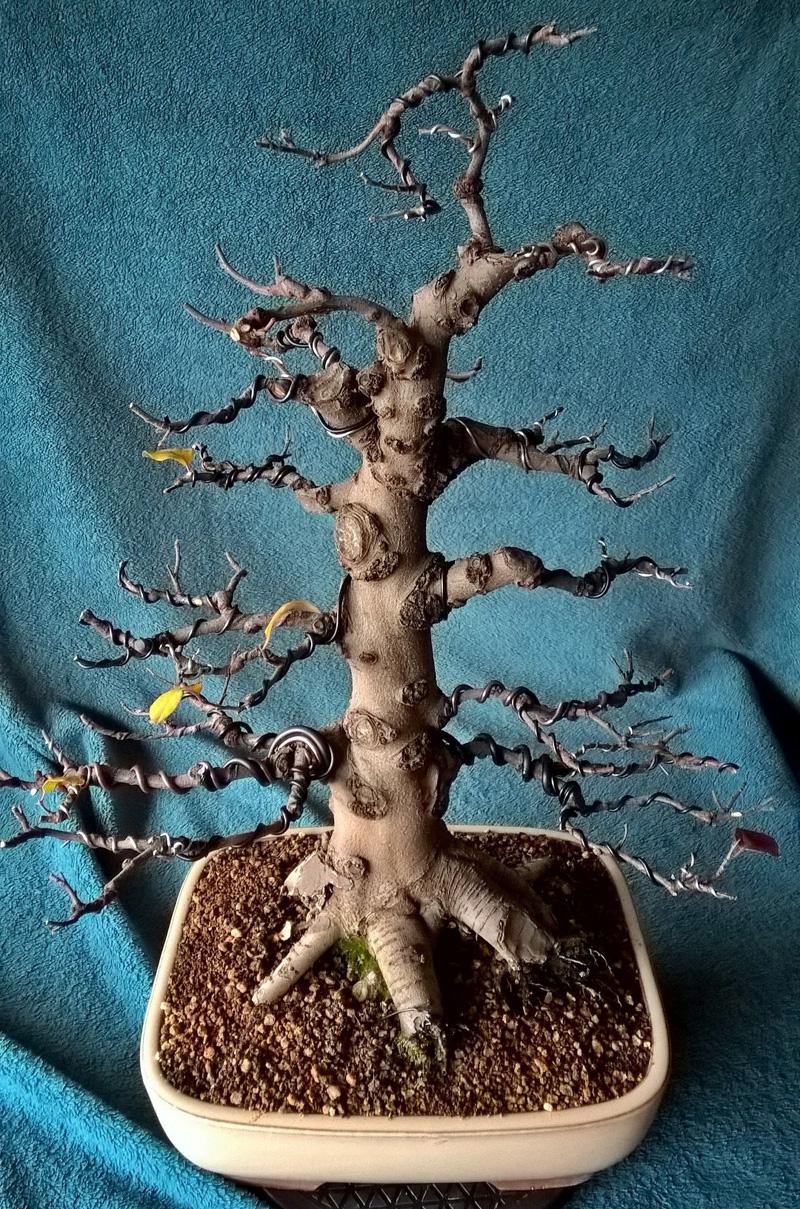 Orea bonsai de membrillo 2d a membrillo 3d el disen o - Arbol de membrillo ...