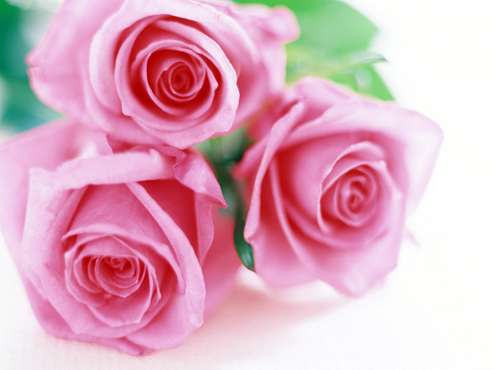 http://4.bp.blogspot.com/--QhU60Ss-LQ/T8A3efkLL8I/AAAAAAAAAzU/H8D2FpHMBe4/s1600/trandafiri+4.jpg