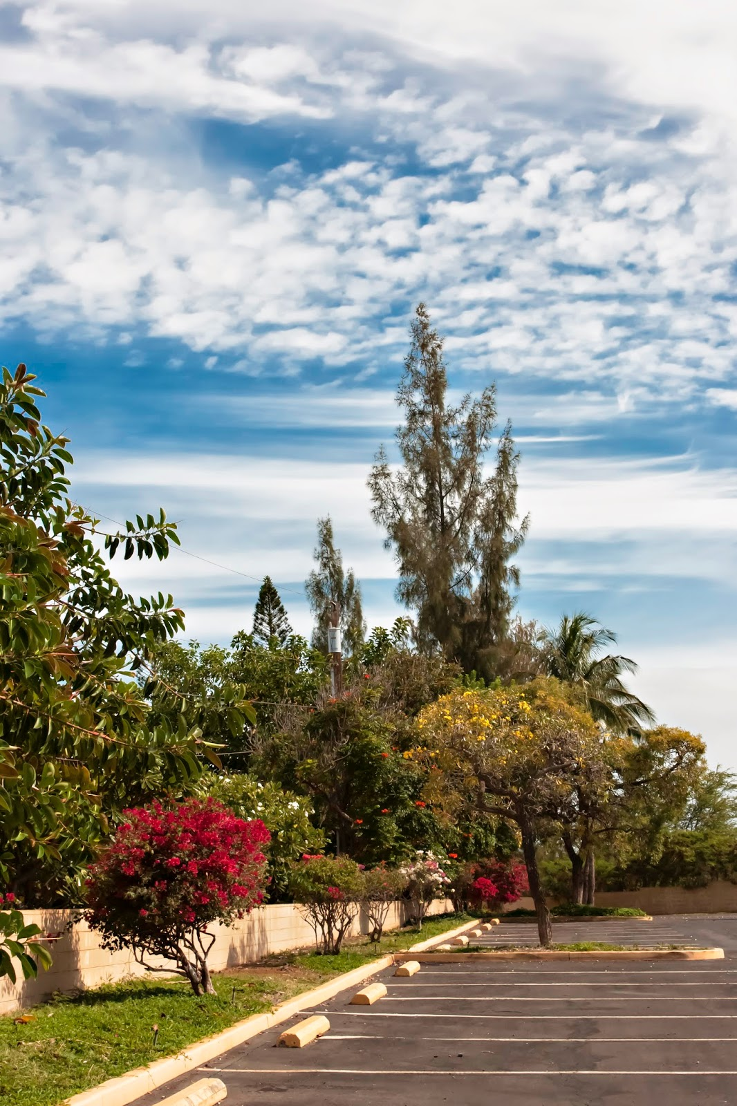 DH Maui Fine Art Photography Spring Has Arrived On Maui And She