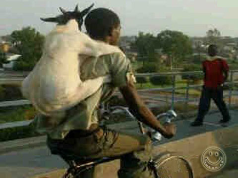 Hewan Qurban :: Khusus Kambing Delivery Service :: Gamb