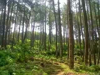 Taman Hutan Jayagiri  Tempat Wisata Kemah Camping di Bandung