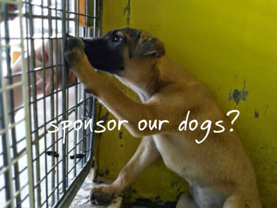K Dogs For Adoption Singapore