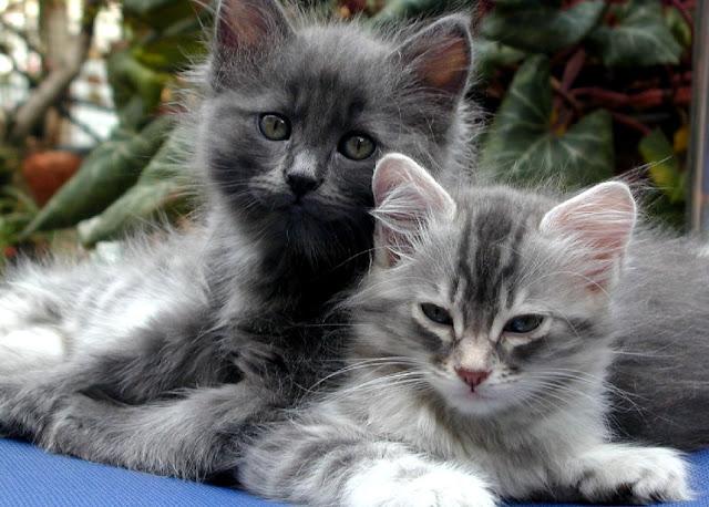 http://4.bp.blogspot.com/--RBVfn6FzOI/Tq5kOxFGKEI/AAAAAAAACnM/LaiZLD0sUKY/s1600/cats.jpg