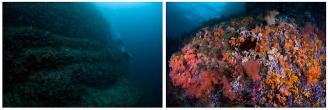 Pulau Empat - Wisata Pulau Taliabu (Provinsi Maluku Utara)