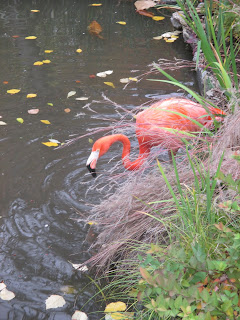 Flamingo, Philadelphia zoo