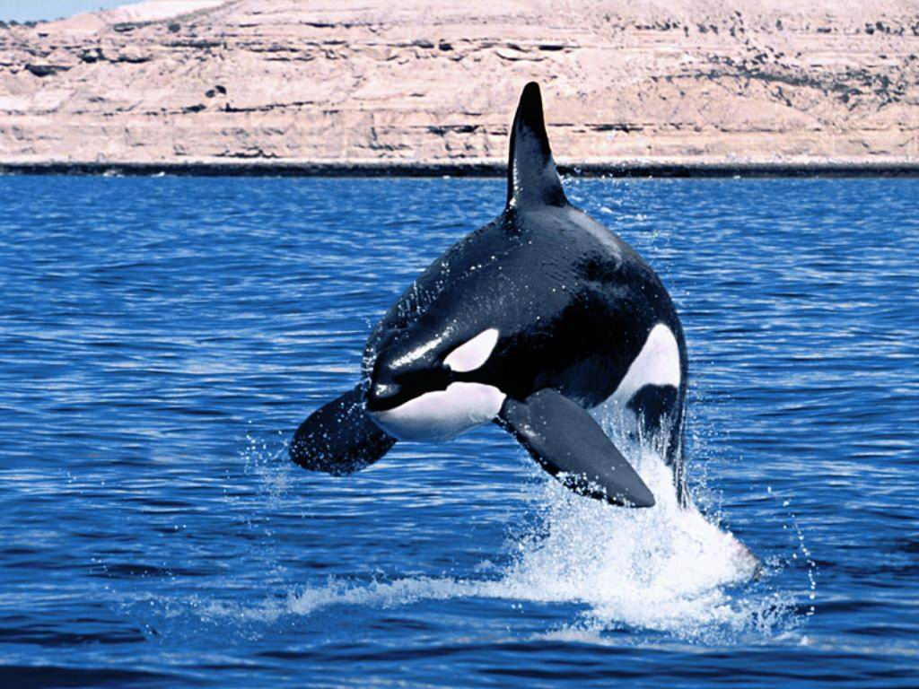 external image wallapapers_whales-ballenas%252520%252820%2529%255B1%255D.jpg