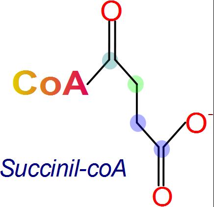 Unidad-I: OXIDACIONES BIOLÓGICAS (Cuestionario p/semana: 14-21 agosto, 2016) - Página 2 Succinil+coenzima+A