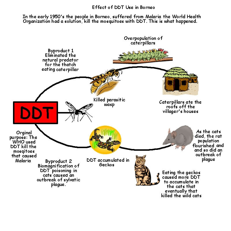 ddt in an aquatic food chain case study