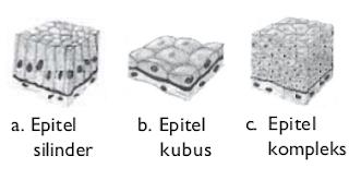 pada setiap organisme mempunyai kekhususan fungsi yang dikerjakan oleh sel yang bersangkut Jaringan  - Materi Biologi Dasar