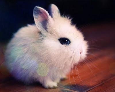 http://4.bp.blogspot.com/--S1Sm8bV4Uk/T3zaI24sNmI/AAAAAAAABMc/pwikJiMtgQA/s1600/awn-bunny-coelho-cute-igottapeenow.tumblr.com-kawaii-Favim.com-93749.jpg