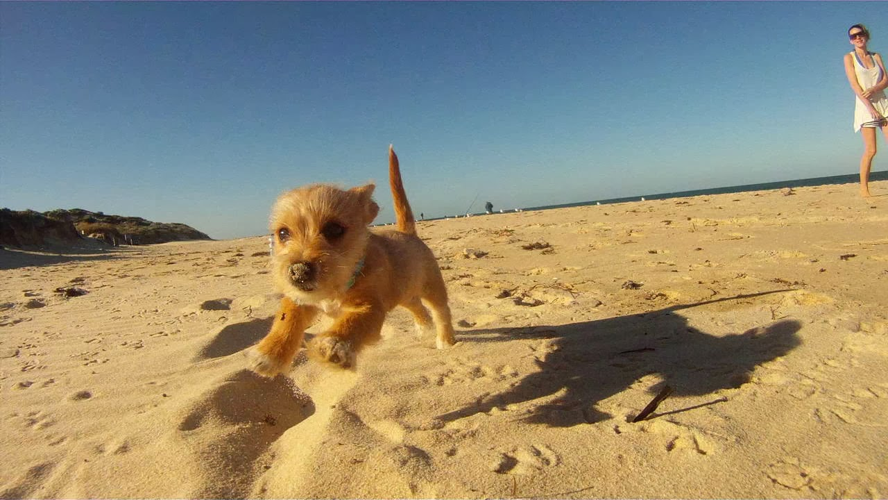 Cute dogs - part 8 (50 pics), puppy running on the beach