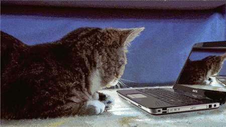 Kucing lihat laptop