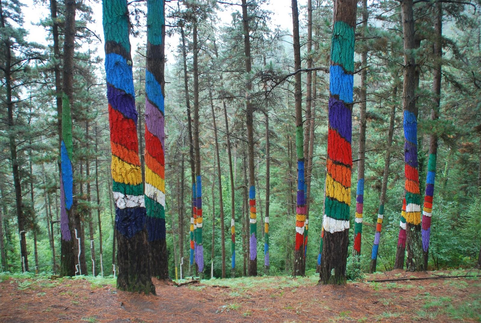 Con el mundo en la mochila bosque de oma kortezubi - Arboles pais vasco ...