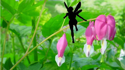 Hazel Fidgetwitch perches on the Dicentra and seems to be shaking them awake