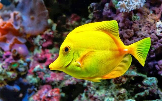 Belajar Bersama Klasifikasi Hewan Ikan Pisces Burung Aves Mamalia