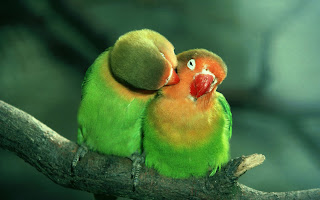 Beautiful Parrots Love On Branch HD Wallpaper