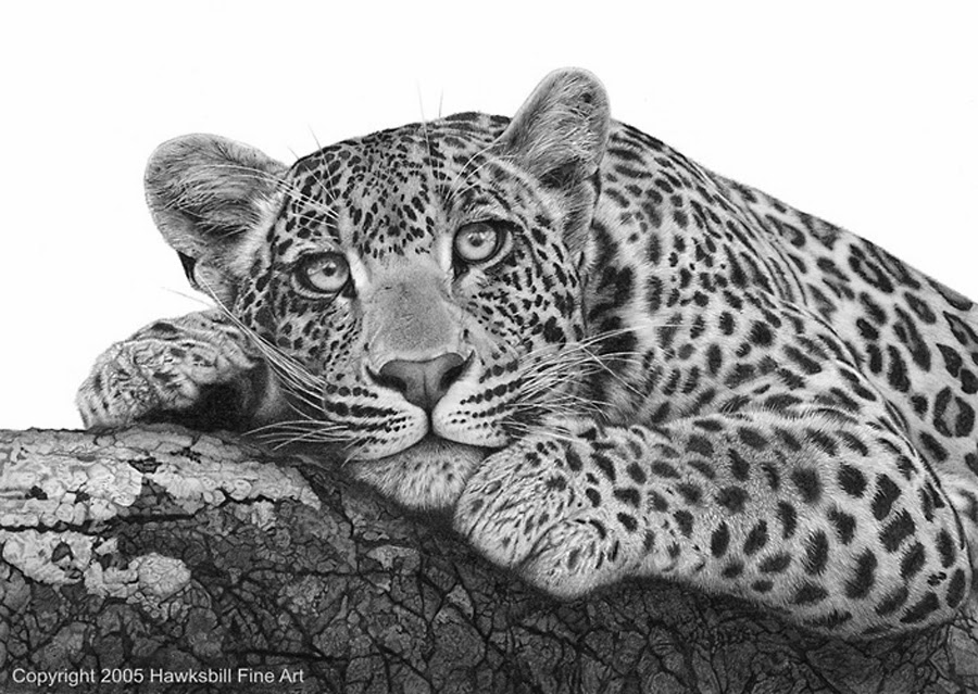 Black jaguar animal drawing - photo#24
