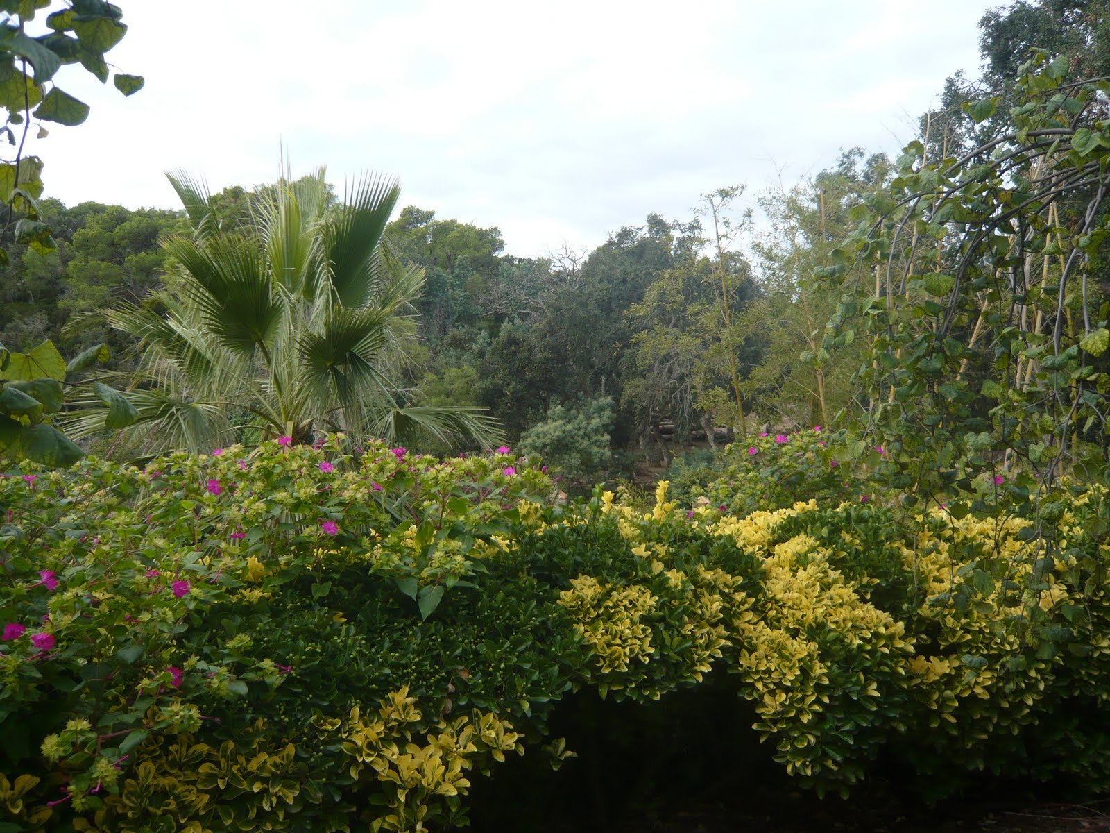 Els dimarts sortim jardins de cap roig for Jardines cap roig