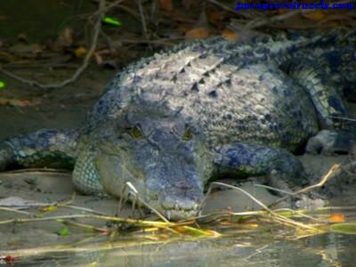 Excursion al East Alligator River de Australia